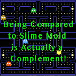#MVP | Being Compared to Slime Mold Is Actually a Complement!